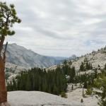 Random image: Juniper Pine