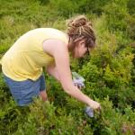 Random image: Lena Picking Blueberries