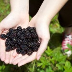Random image: Ripe Blackberries