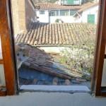 Random image: Feline Friend