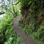 Random image: Inca Trail