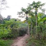 Random image: Beautiful Medecinal Gardens at Ñape