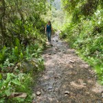 Random image: Jungle Trail
