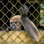Random image: Caged Monkey