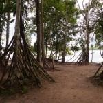 Random image: Beautiful Jungle Scenery