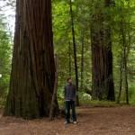 Random image: Jason and a Redwood